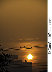 The early morning sunlight shining on large buildings and the birds on the wires