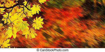 easy picture beautiful maple autumn landscape background