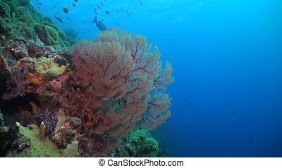The edge of a coral reef