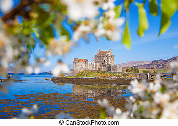 The Eilean Donan Castle with spring tree in Highlands of Scotland
