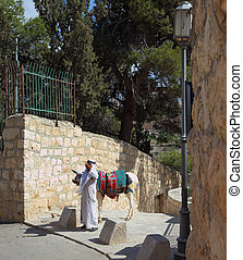 The elderly Arab in white and a white donkey