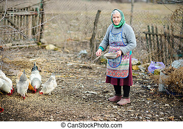 The elderly peasant woman feeds hens on the courtyard.