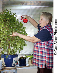 The elderly woman sprinkles plant In apartment
