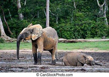 The elephant calf bathing in a dirt. Mud baths.