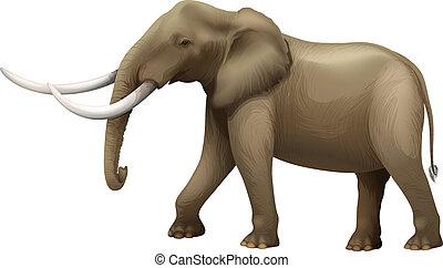 The Elephant - Illustration of the elephant
