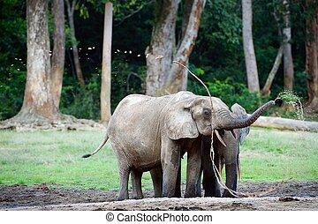 The elephant splashes water.