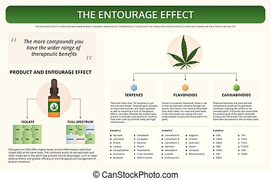 The Entourage Effect horizontal textbook infographic