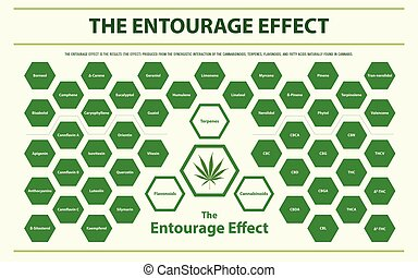 The Entourage Effect Overview horizontal infographic