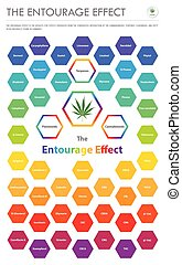 The Entourage Effect Overview vertical business infographic