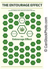 The Entourage Effect Overview vertical infographic