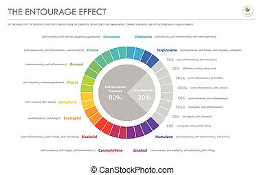 The Entourage Effect Proportion horizontal business infographic