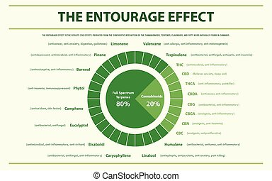The Entourage Effect Proportion horizontal infographic
