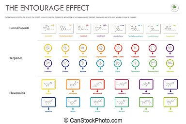 The Entourage Effect with Structural Formulas horizontal business infographic