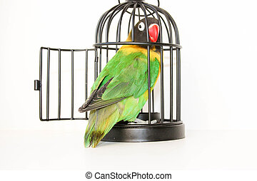 the escape. Parrot in a cage with an open door