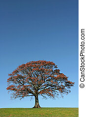 The Essence of Autumn - Oak tree in a field in autumn with...