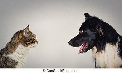 The eternal duel between dog and cat for the title of the ...