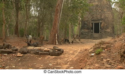 The exterior of the Khmer temple, Sambor Prei Kuk - A...