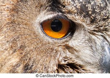 the eye of a Real owl, (bubo bubo)
