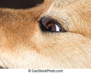 the eyes of a dog. macro