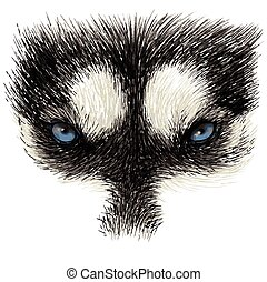 The eyes of Siberian Husky stare at you, hand drawn isolated...