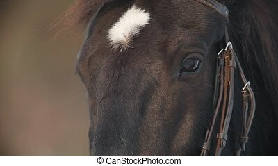 The face and eyes of the brown horse closeup, spot on his...