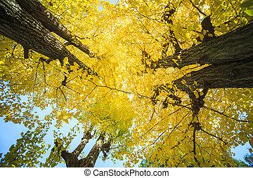 The fall season of Nishi Honganji temple in Kyoto - KYOTO,...