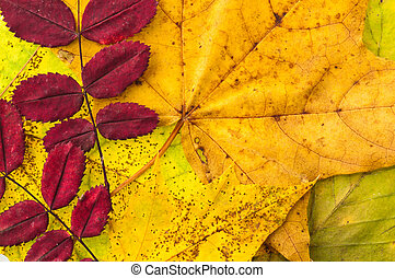 The fallen down leaves