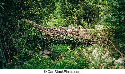 The fallen trunk of a large tree on a forest path against a background of green bushes and grass.