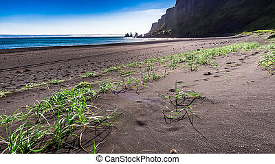 The famous black sand beach in Iceland