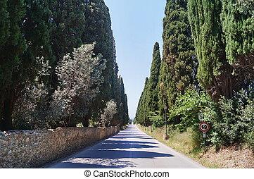 The famous cypress avenue, Bolgheri, Tuscany, Italy