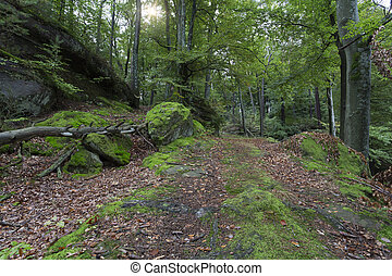 """The famous """"Palatinate Forest"""" in Germany"""