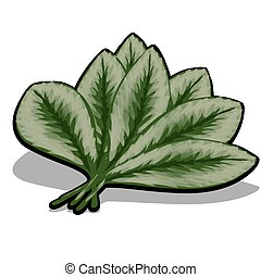 The fan of green leaves isolated on white background. Vector cartoon close-up illustration.