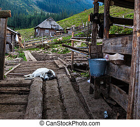 Calf in a pen and a sleeping sheepdog - The farm in the ...
