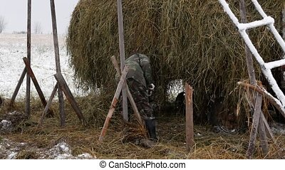 The farmer collects hay bales after loading on cart