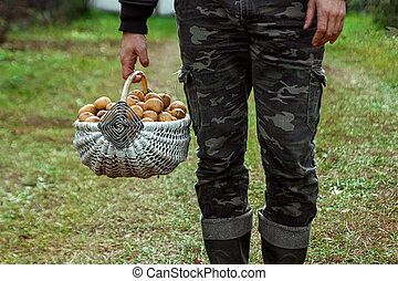 The farmer holds in his hands fresh potatoes in a basket, organic vegetables, close-up. The concept of a garden, cottage, harvest.