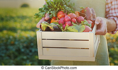 The farmer is holding a wooden box with fresh vegetables. Organic agriculture concept