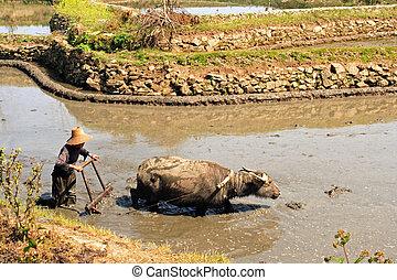 the farmer - yunnan province,China