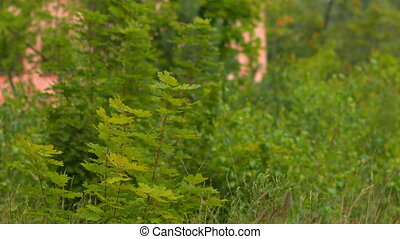 The fern on a background of green grass