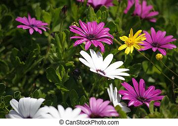 The field flowers