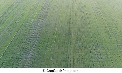 The fields are sown with a bird's eye view of the harvest....