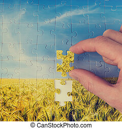 Man holding the final piece of a puzzle of a landscape view of a golden wheat field in his hand conceptual of problem solving and conservation, image has a faded instagram effect.