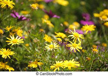 The fine field flowers in Israel