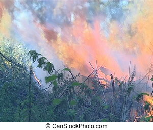 Flames destroy everything alive. - The fire in the forest....