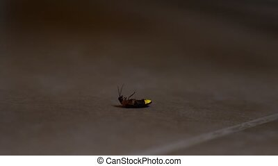 The firefly crawls along the tiled floor in the backyard,...