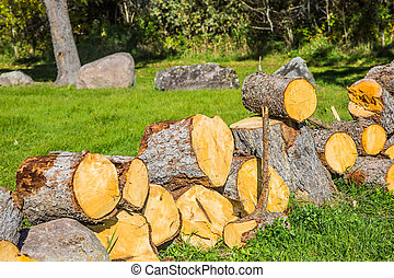 The firewood for the winter