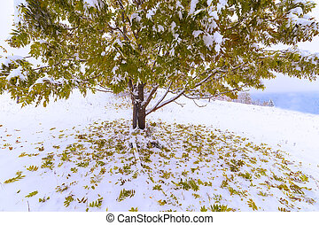 The first fall of snow. Yellow birch leaves in the snow