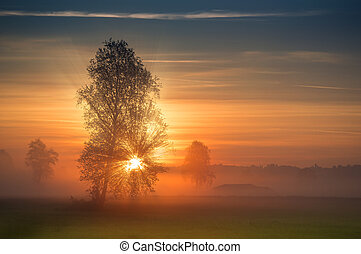 The first rays of the sun breaks through the branches of a tree at sunrise
