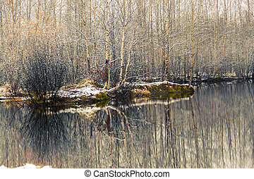The first snow covered branches of birches on the lake