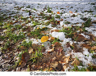 The first snow on a green lawn covered with colorful autumn fallen leaves close-up.
