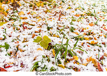 the first snow on the grass and fallen leaves